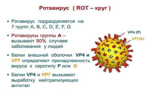Ротавирусная инфекция – симптомы и лечение у взрослых