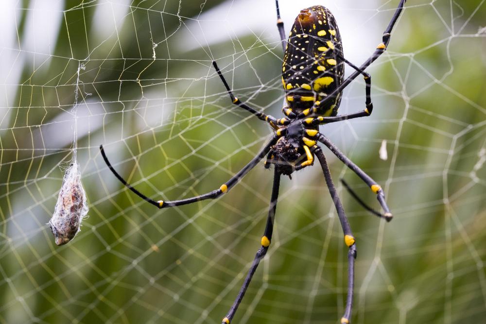 Паутина паука: как плетёт, где она образуется, откуда выходит, роль паутины в жизни паука?