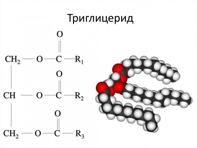 Тг (тиреоглобулин)