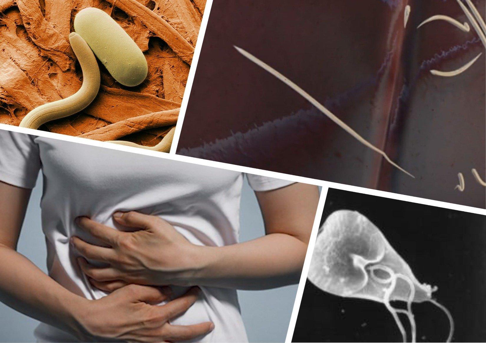 Таблетки от глистов для человека: схема лечения в домашних условиях