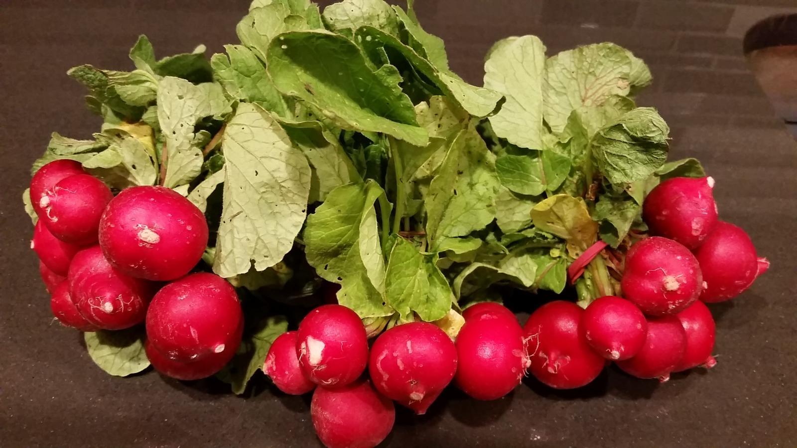 Свекла: что это такое, описание и свойства овоща, интересные факты о нем, урожайность с 1 га, а также какого цвета корнеплод, как выглядят на фото разные сорта?