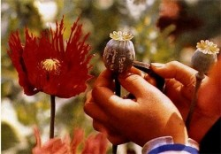 Отбогемных экспериментов куличной наркомании. как использовали икак запрещали опиаты вовремена томаса декуинси, вертинского ирузвельта