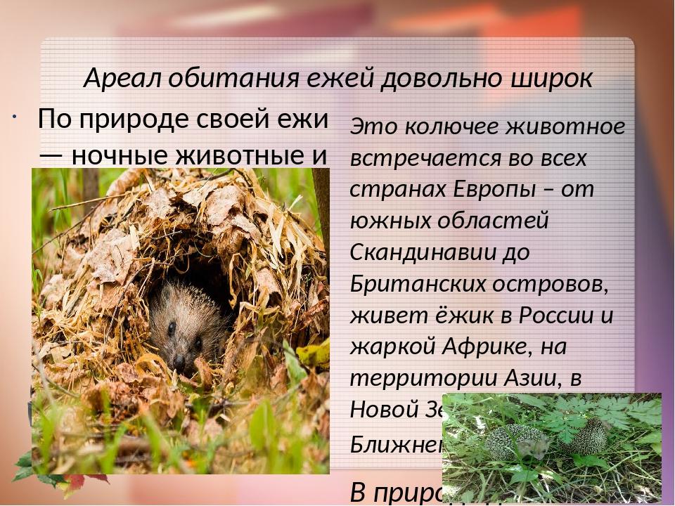 Еж – описание, виды, где живет, чем питается, размножение, фото