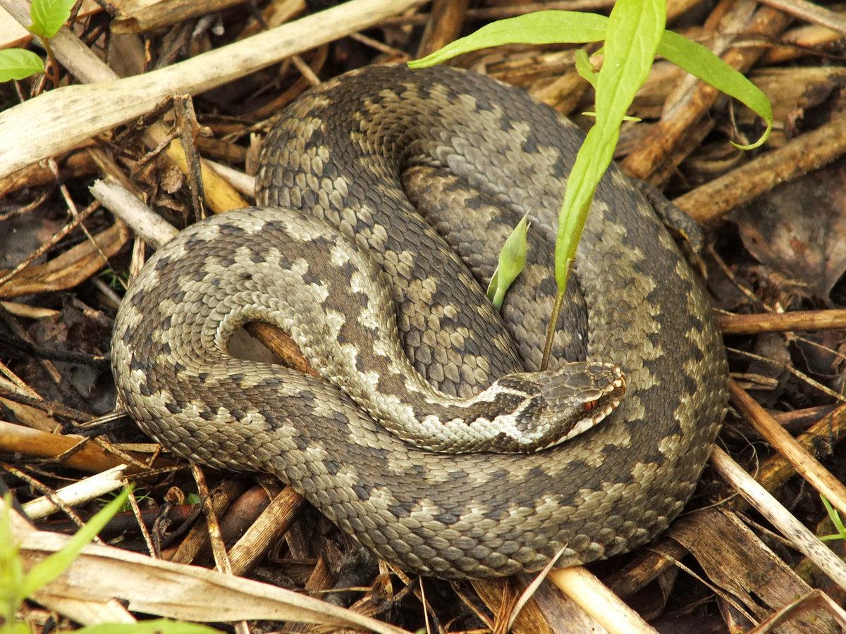 Гость в джунглях: что нужно знать о змеях