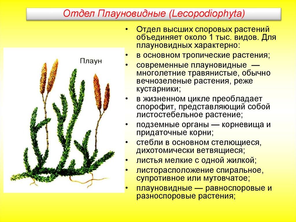 Современные высшие растения возникли врезультате сдвига экспрессии генов