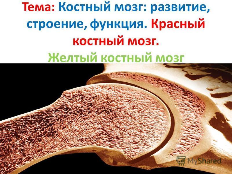 Из какой ткани состоит красный костный мозг