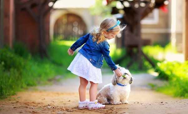 Большой пёс — википедия. что такое большой пёс