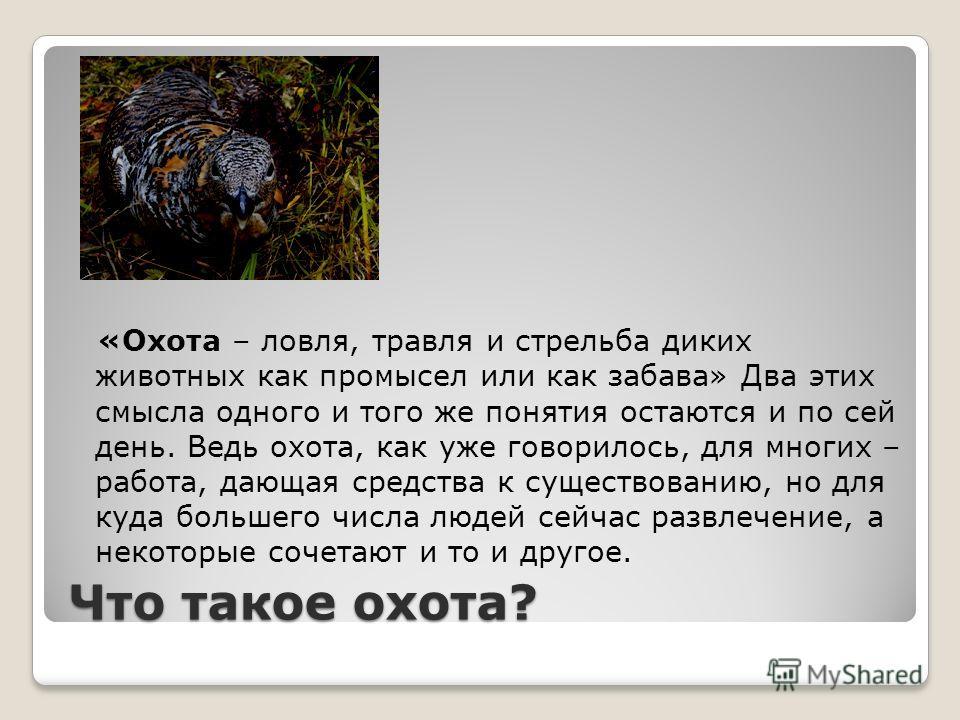 Охота, её основные правила и популярные направления