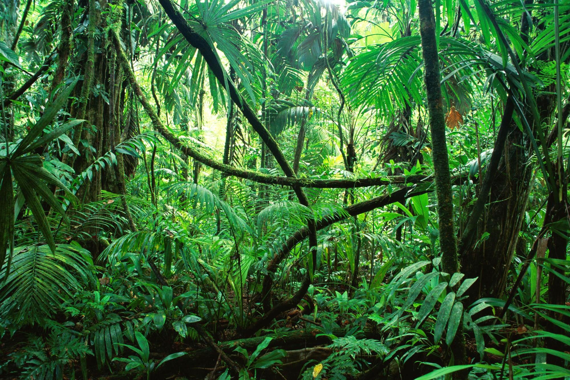 Джунгли (фильм, 2012) — википедия. что такое джунгли (фильм, 2012)
