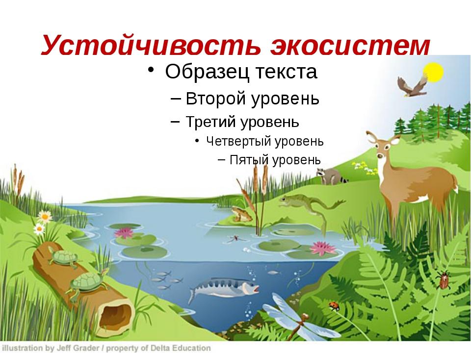 Экологическая система: понятие, суть, типы, примеры, уровни, фото и видео