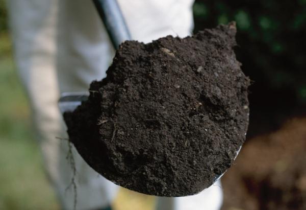 Чем чернозем отличается от земли: описание и отличия