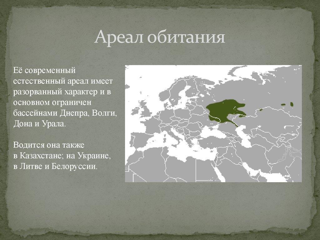 Ареал — википедия. что такое ареал