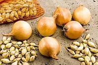 Лук-севок: что это такое, разновидности, описание популярных сортов, посадка и уход
