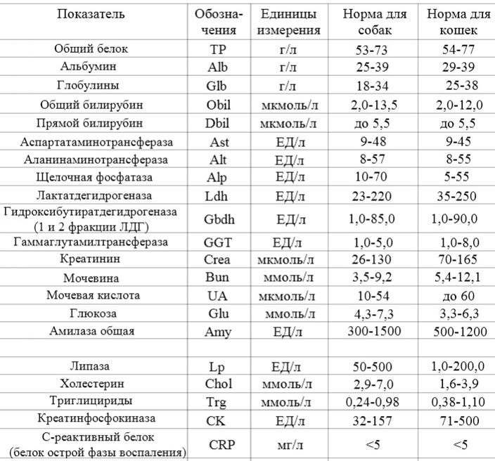 Нормы лактатдегидрогеназы (лдг) в крови и причины повышения