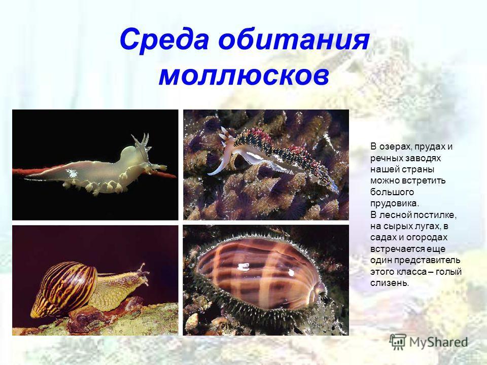 Урок 2: среды жизни - 100urokov.ru