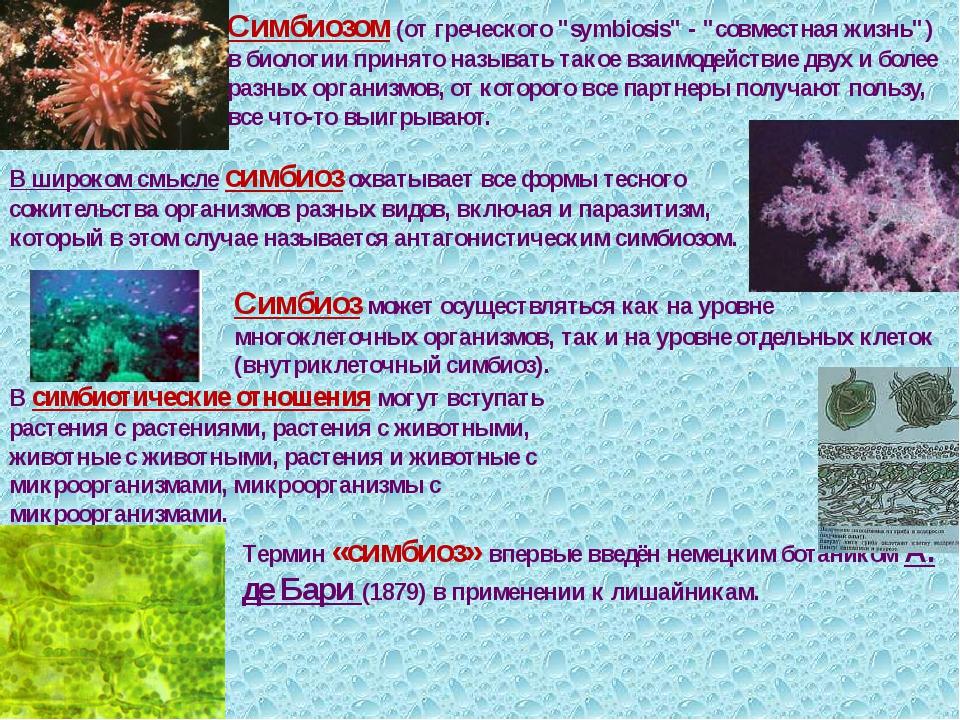 Мутуализм - взаимодействия между видами приносящие обоюдную пользу. интеллектуальные способности у животных. поведение животных