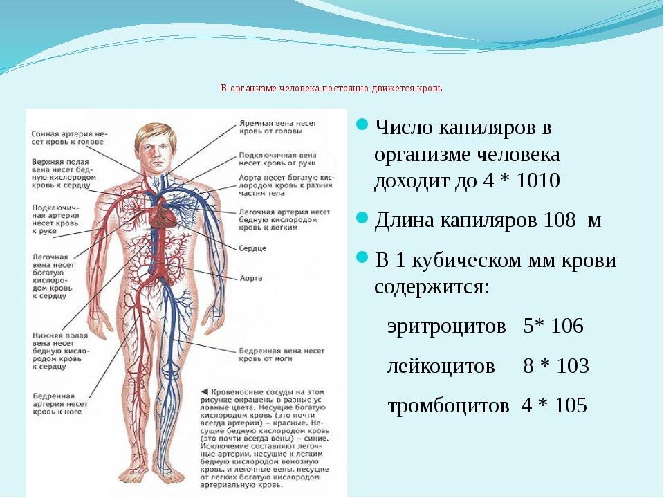 Артерия — википедия. что такое артерия
