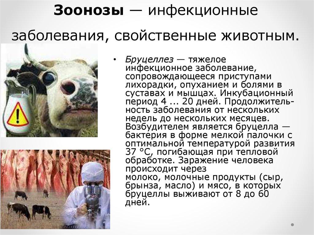 Зоонозные заболевания: признаки, способы передачи