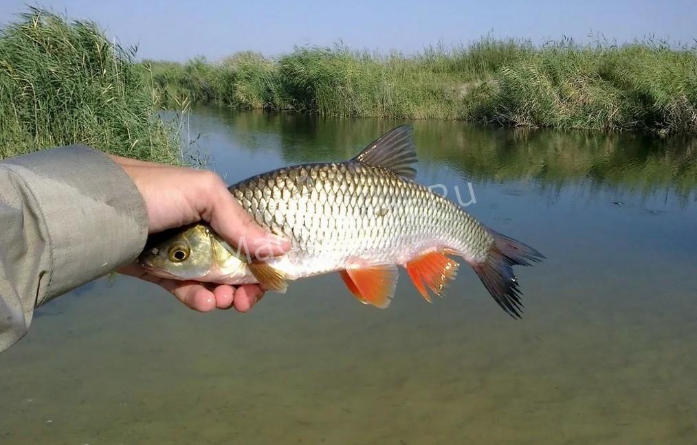 Что такое рыба*