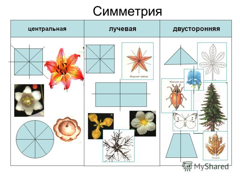 Симметрия и её виды | обучонок