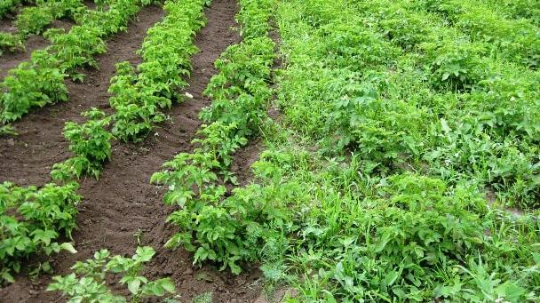 Что такое пестициды и чем они опасны?