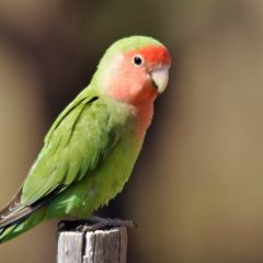 Птицы — циклопедия
