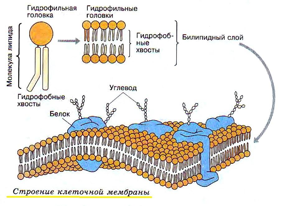 Ткань мембрана: что это такое, фото, описание, состав, свойства, достоинства и недостатки