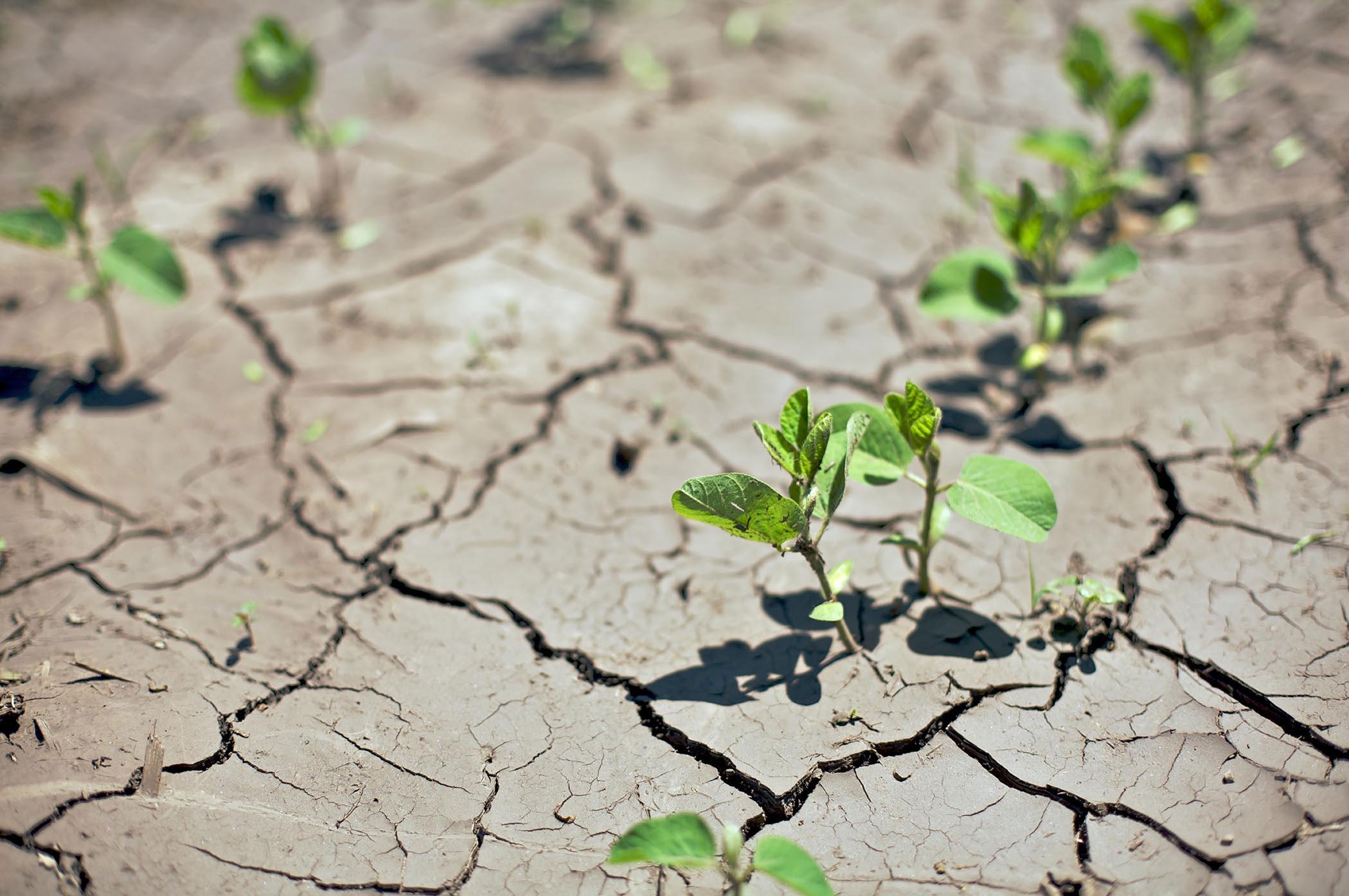 Проблема опустынивания земель на территории рф: какие регионы и почему наиболее подвержены этой проблеме