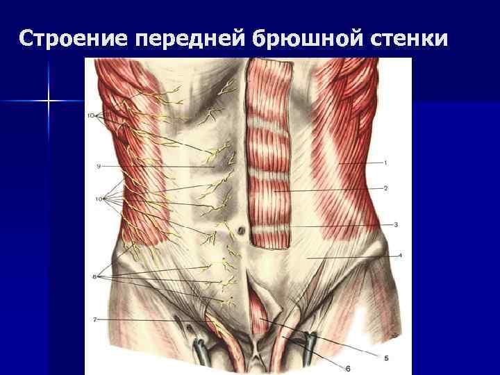 Апоневроз подошвенный и ладонный: что это такое, симптомы и лечение воспаления, апоневроз мышц живота и головы