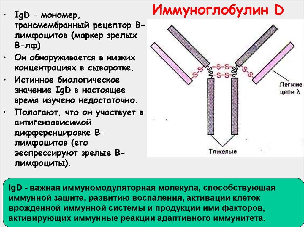 Что показывает анализ на общий иммуноглобулин е - при каких заболеваниях может повышаться ig e