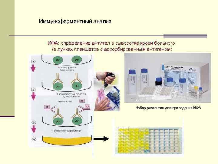 Ифа анализ крови на паразитов: расшифровка