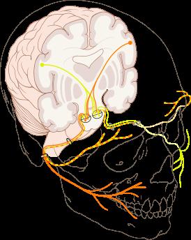 Что такое нервы?