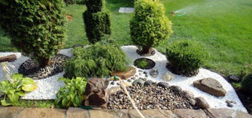 Как правильно подобрать растения для рокария в саду
