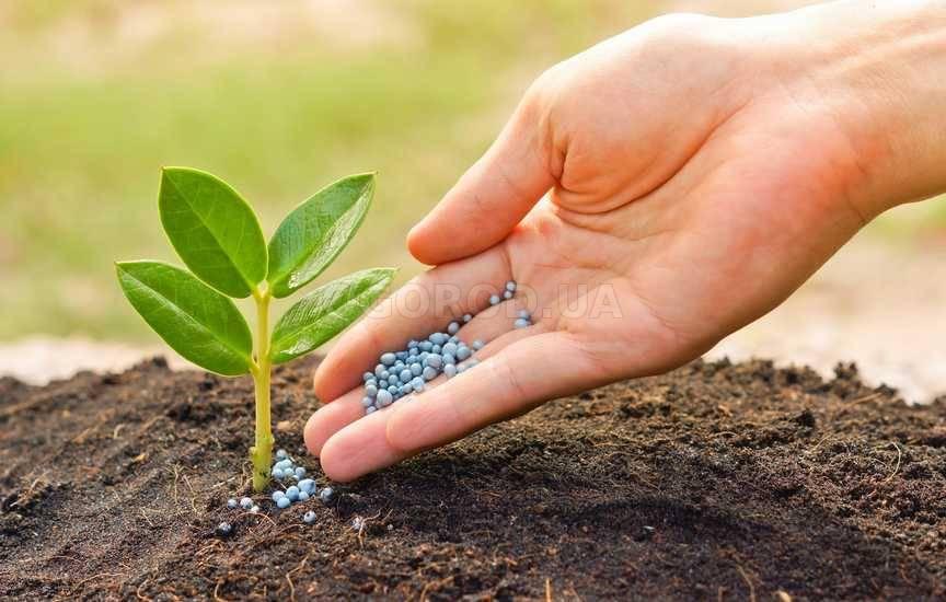 Нитроаммофоска: состав удобрения и его применение в саду и огороде | дела огородные (огород.ru)