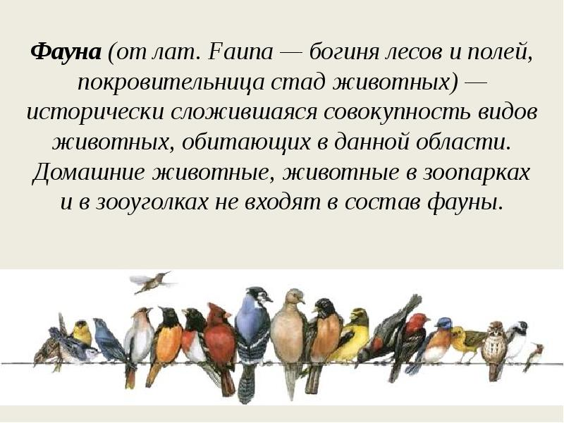 Фауна что это? значение слова фауна