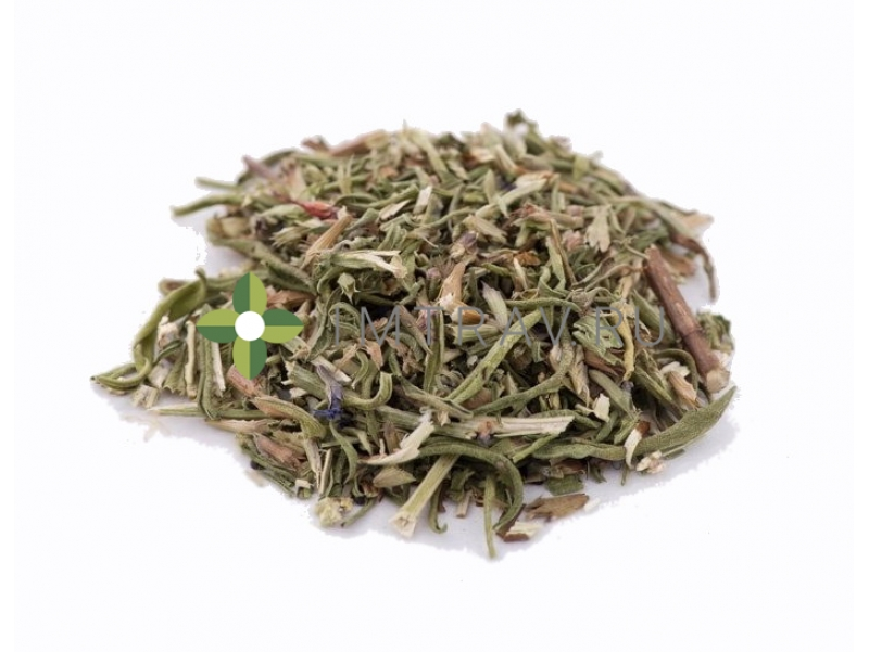 Иссоп лекарственный применение травы в медицине и кулинарии: сорта, свойства, действие, способы применения, противопоказания и рецепты