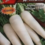 Дайкон - рецепты