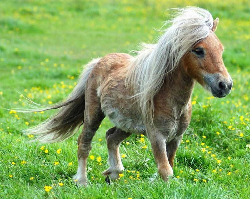 My little pony, список персонажей