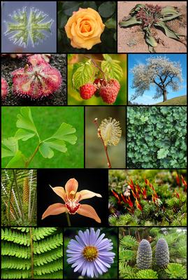 Растения — википедия. что такое растения