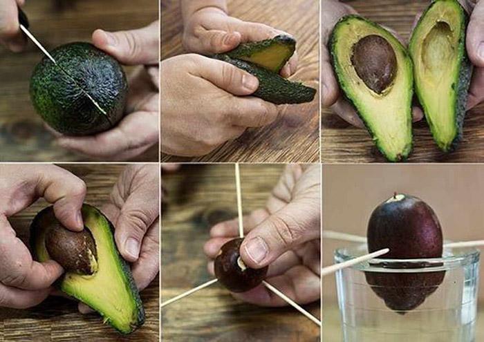 Авокадо: как его едят, и какие блюда из него готовят