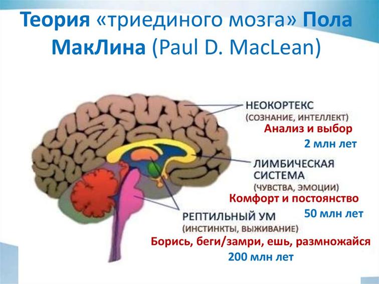 Неокортекс ????: что это такое у человека, за что отвечает, строение и функции новой коры головного мозга