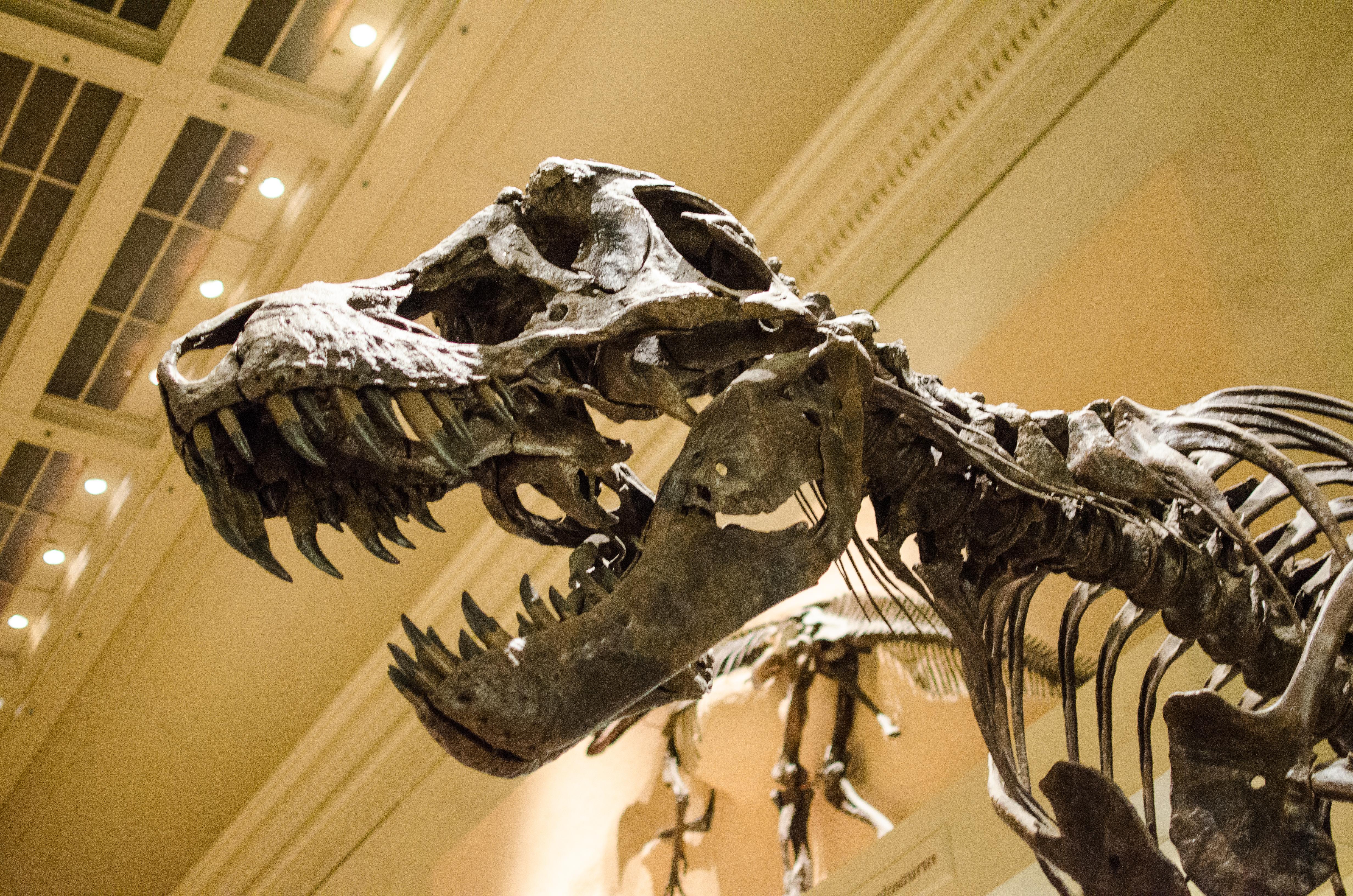 Профессия палеонтолог: суть работы, карьера и перспективы профессии
