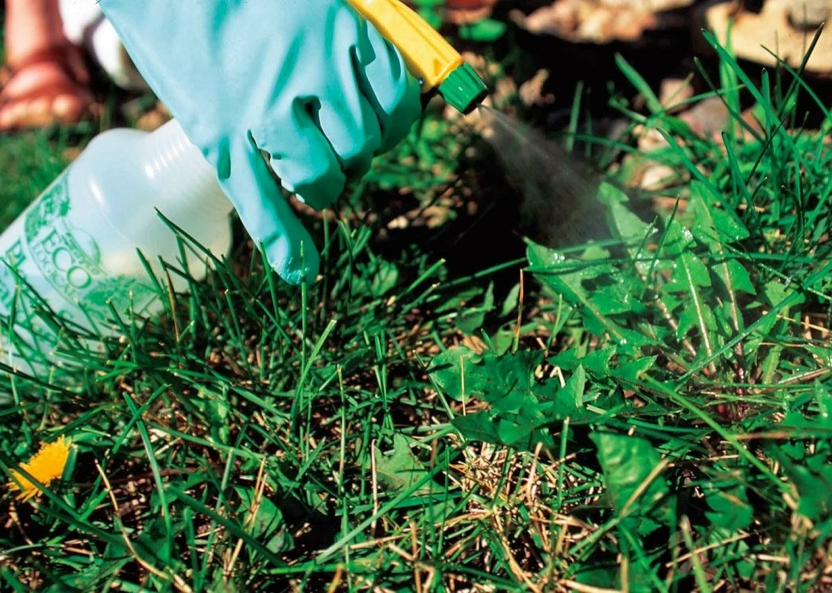 Почвенный гербицид сплошного действия: детали использования