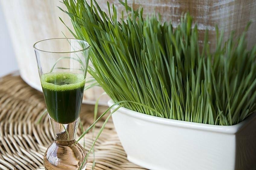 Витграсс (wheatgrass): живая вода существует!