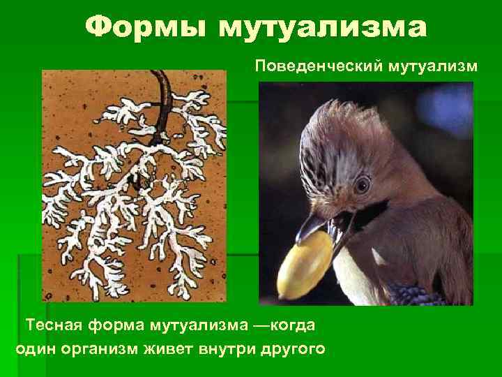 Симбиоз и мутуализм - взаимодействия организмов