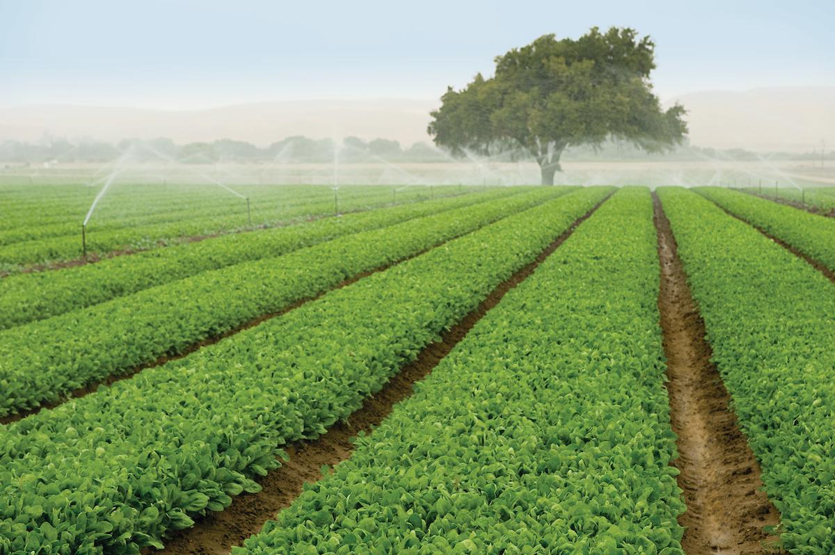 Природное земледелие что это такое