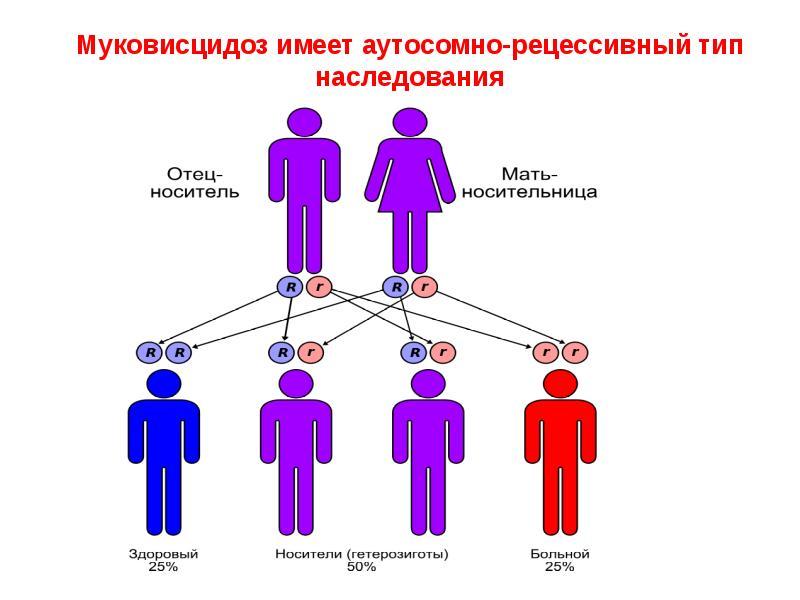 Наследственность человека. как работают наши гены?