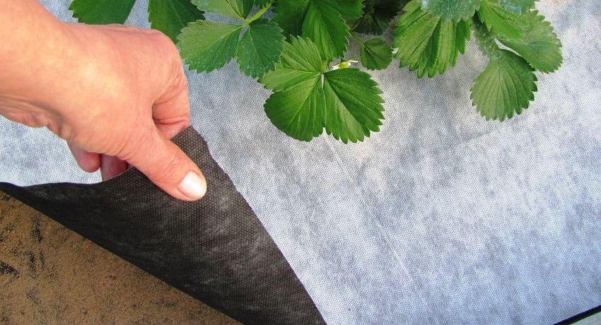 Спанбонд (43 фото): что это такое?  виды нетканого материала: ламинированный, белый и цветной. плотность и состав ткани
