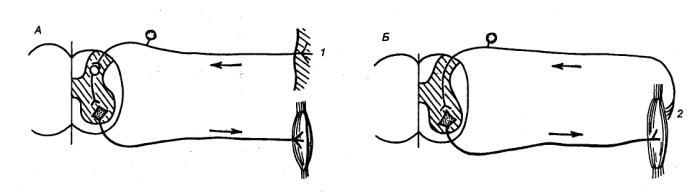 Рефлекторная дуга глаза: особенности строения, зрительный путь