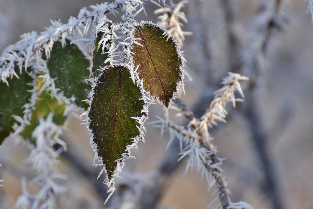 Иней и изморозь: характеристика, отличие, интересные факты (фото)
